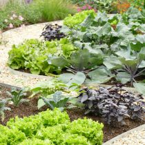 Blossoming Countryside Vegetable Garden