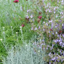 Herbal Dry Meadow