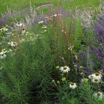 Purple-White Slope