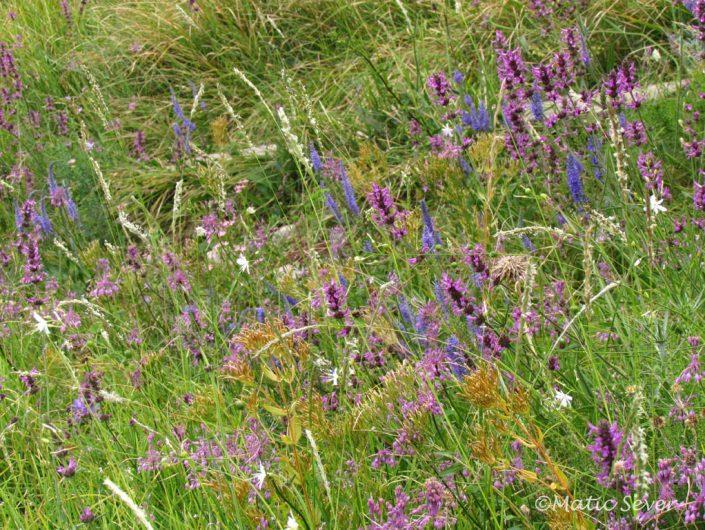 Dry meadows