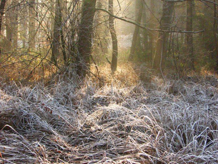 Woods SL